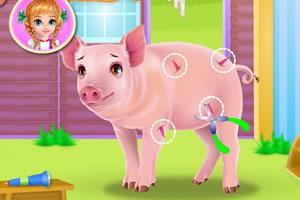 小猪的日常护理
