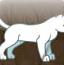 丛林猫猎手