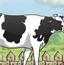 农家女牛棚洗涮涮