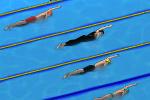 游泳冠军争夺赛
