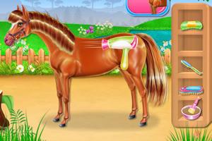 小马护理和骑马/小马